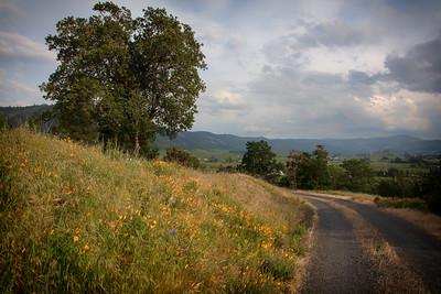 Hood River Valley Wildflowers Golden Hour 5-19-18
