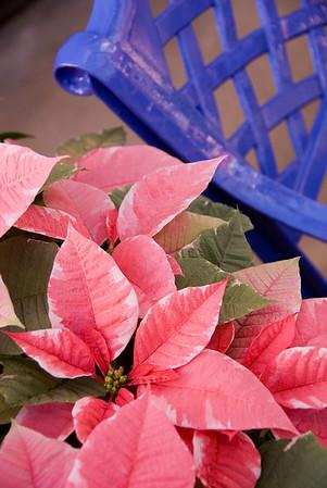 Christmas in the Garden (1)