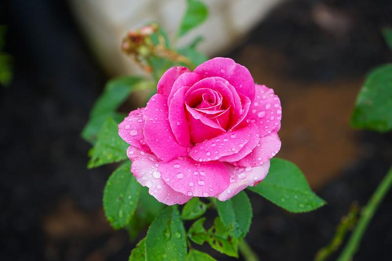 Beauty in the Garden