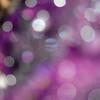 Raindrop Dancing in Violet