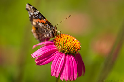 Flowers & Insects
