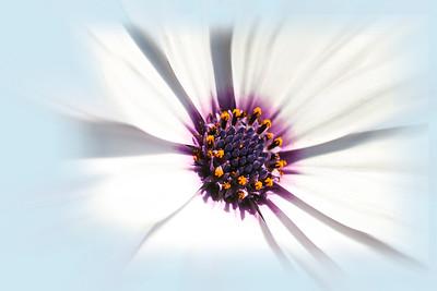 aug 22 flowers-13