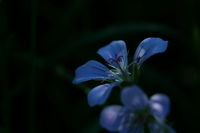 Kukka jälleen - Flower again :o)