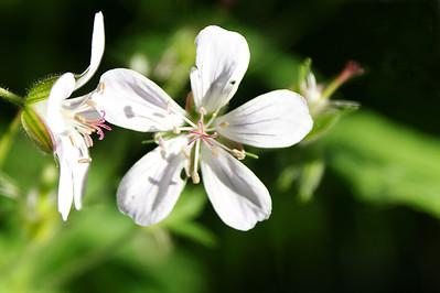 Kukka - Flower :o)