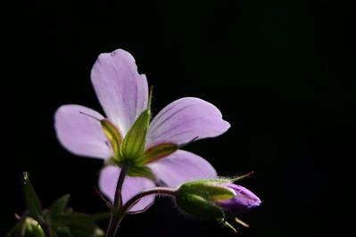 Kukka tämäkin - Flower again :o)