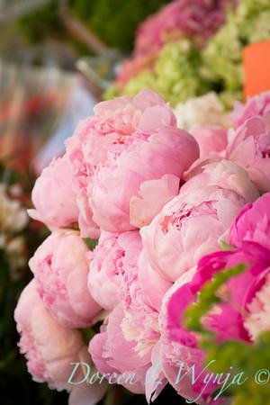 Paeonia - Peony flowers_2405