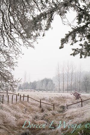 Winter frost_9435