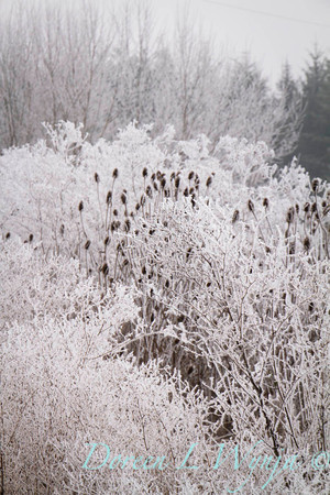 Winter frost_9310
