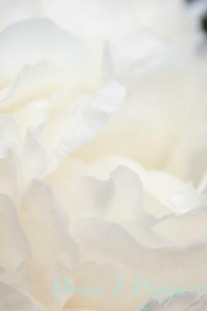 White Peony_042
