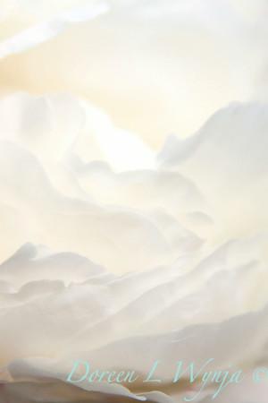 White Peony_039