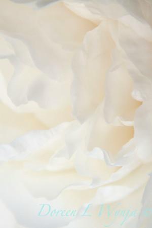 White Peony_041
