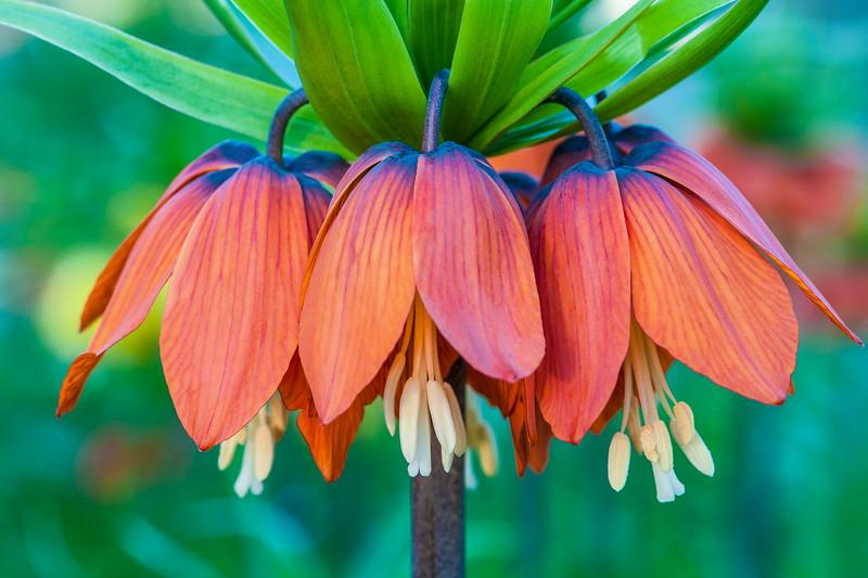 Crazy Cascading Flower
