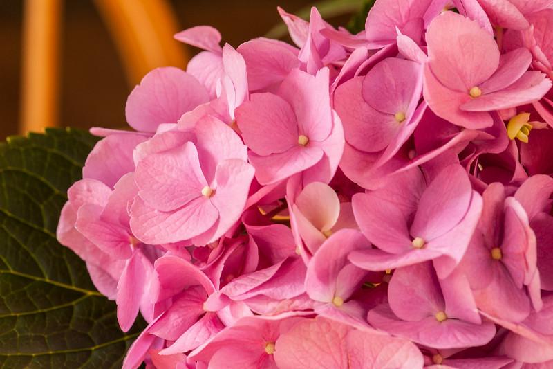 Pink Hydrangea Cluster