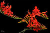 red flower-1