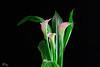 pink flower-1