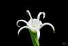 white flower-3
