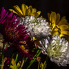 Chrysanthemum bouquet on kitchen table in afternoon sun through south window