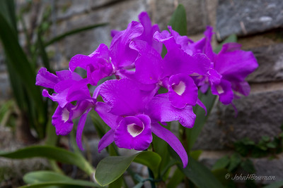 Lewis Ginter Botanical Garden was 2nd stop of full day during Steve Brown's visit; orchids & other exotics in E wing of Conservatory made interesting viewing & shooting