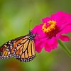 Monarch 7x11