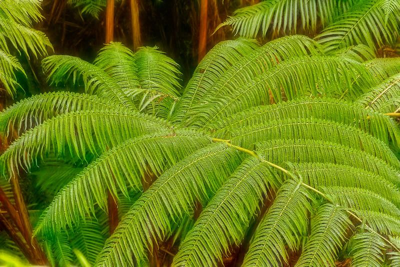 2014-02-14_Big-Island_Canon7D_.jpg