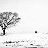 My favorite tree to photograph in Boone, Iowa. So far.