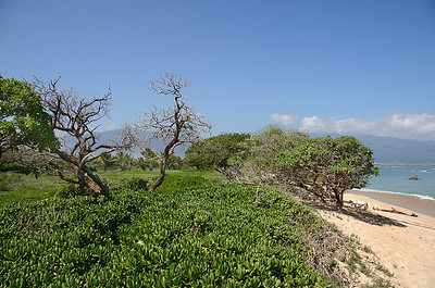 The stabilized berm at Kanaha Beach, Kahului, north Maui.