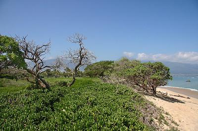 The stabilized berm at Kanaha Beach, Kahului, north Maui.