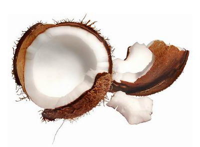"""This image shows the hard inner """"stone"""" (endocarp) of the coconut (Cocos nucifera). The white """"coconut meat"""" is the endosperm. The liquid often referred to as  """"milk"""" is actually the cotyledon, a sweet, spongy mass that eventually dissolves and begins to absorb the endosperm. The product sold as """"coconut milk"""" in stores is usually the liquid extracted from the coconut meat when it is pulverized.  Note: """"Endosperm"""" is the tissue produced in the seeds of flowering plants at the time of fertilization. It surrounds the embryo and provides nutrition (starch), though it can also contain oils and protein."""