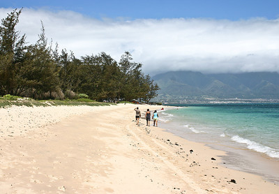 Kanaha Beach, Kahului Bay, north Maui. The local plant species help stabilize the white coral sands of this beautiful stretch of beach. The tallest trees are Ironwood, mixed in with Kiawe (mesquite) and Kukui (Candlenut) trees. The tall bushes are Tree Heliotrope and the hummocky shrubs are Beach Naupaka.