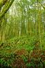Ferns in the Myrtlewood