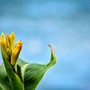 Namaste Iris