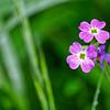 Wee Wildflowers