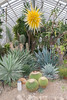 Phipps Conservatory<br /> Pittsburgh, Pennsylvania<br /> MSK_4435 - 10/30/17 2:25:28 PM