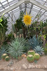 Phipps Conservatory<br /> Pittsburgh, Pennsylvania<br /> MSK_4436 - 10/30/17 2:25:42 PM