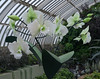 Phipps Conservatory<br /> Pittsburgh, Pennsylvania<br /> MSK_3560 - 5/11/17 2:29:11 PM