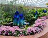 Phipps Conservatory<br /> Pittsburgh, Pennsylvania<br /> MSK_4391 - 10/30/17 1:58:57 PM