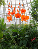 Phipps Conservatory<br /> Pittsburgh, Pennsylvania<br /> MSK_4424 - 10/30/17 2:16:31 PM