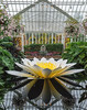 Phipps Conservatory<br /> Pittsburgh, Pennsylvania<br /> MSK_4450 - 10/30/17 2:34:58 PM