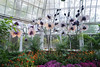 Phipps Conservatory<br /> Pittsburgh, Pennsylvania<br /> MSK_4459 - 10/30/17 2:40:21 PM