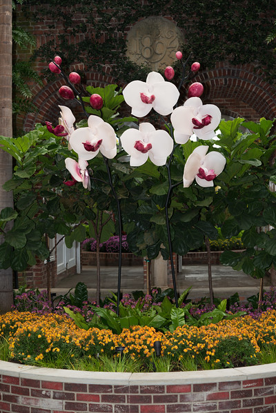 Phipps Conservatory<br /> Pittsburgh, Pennsylvania<br /> MSK_4380 - 10/30/17 1:53:32 PM