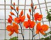 Phipps Conservatory<br /> Pittsburgh, Pennsylvania<br /> MSK_3620 - 5/11/17 3:28:17 PM