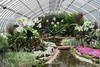 Phipps Conservatory<br /> Pittsburgh, Pennsylvania<br /> MSK_4448 - 10/30/17 2:34:12 PM