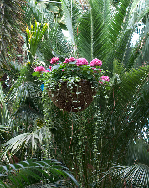 Phipps Conservatory<br /> Pittsburgh, Pennsylvania<br /> MSF_5248