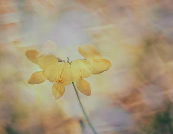 Daydream in Yellow
