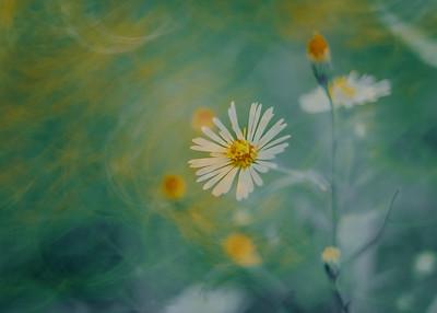 Soft Flowers I