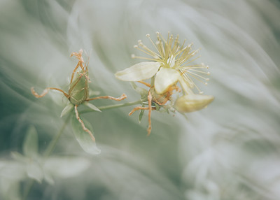 Soft Flowers V