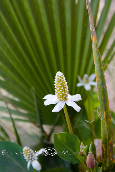 Mini Flower in the Baja 2008