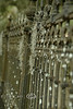 Spanish Moss on the Wroght Iron Fence - Edisto Island South Carolina 2007