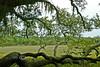 Spooky Swamp - Edisto Beach Campground South Carolina  2007