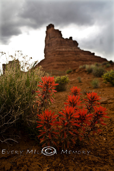 Small Blooms on the Desert Floor - Utah 2008